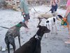 Puppies_024