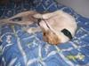 Puppies_029