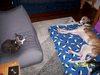Puppies_046_1