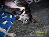 Puppies_047