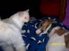 Puppies_060