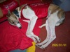 Puppies_065